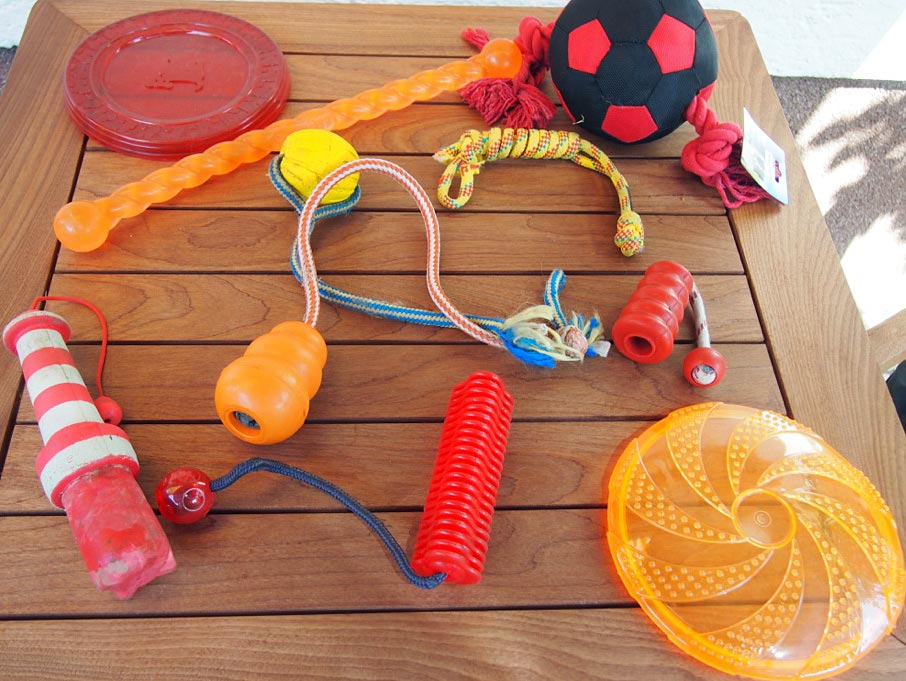 Spielzeug tierisch informiert